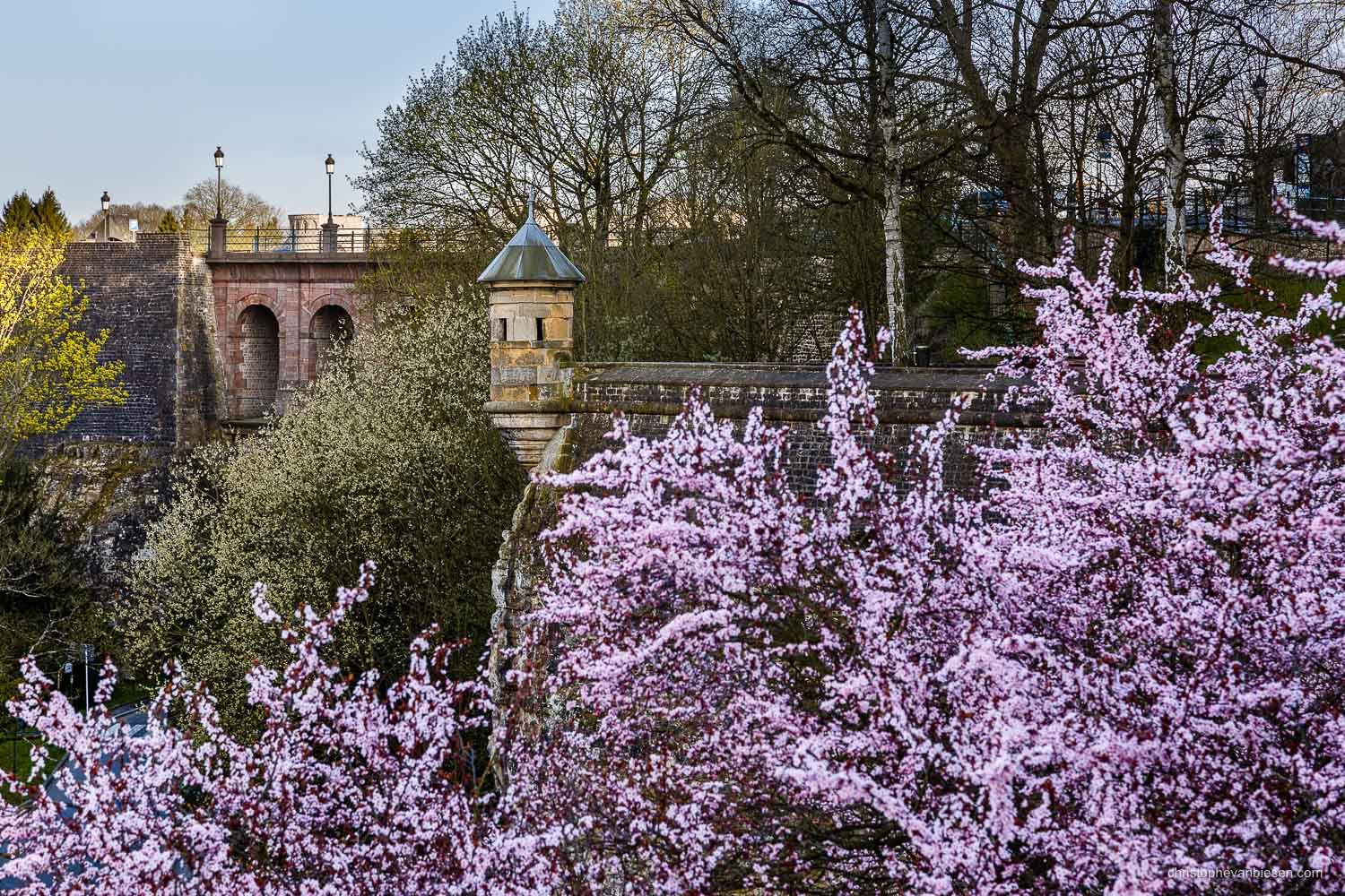 Spring in Luxembourg - Spring in Luxembourg City. The pink blossoms on some cherry trees look like waves crashing on the rock of the ancient fortress - Pink Tide