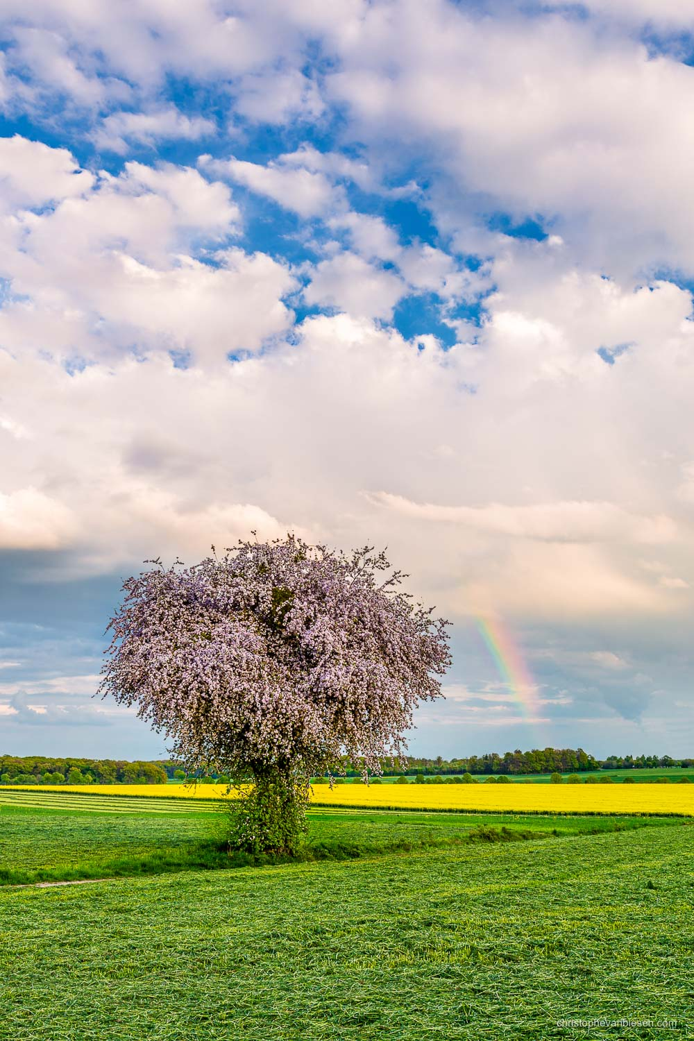 Spring in Luxembourg - In the middle of Luxembourg's countryside. Meet my new favorite tree - After the rain...