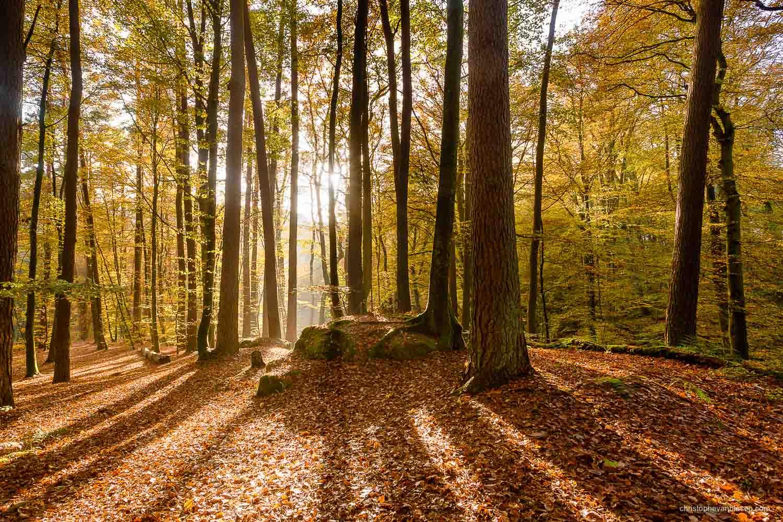 Autumn in Luxembourg - Autumn in Luxembourg's forests in the Mullerthal region - Creeping Shadows