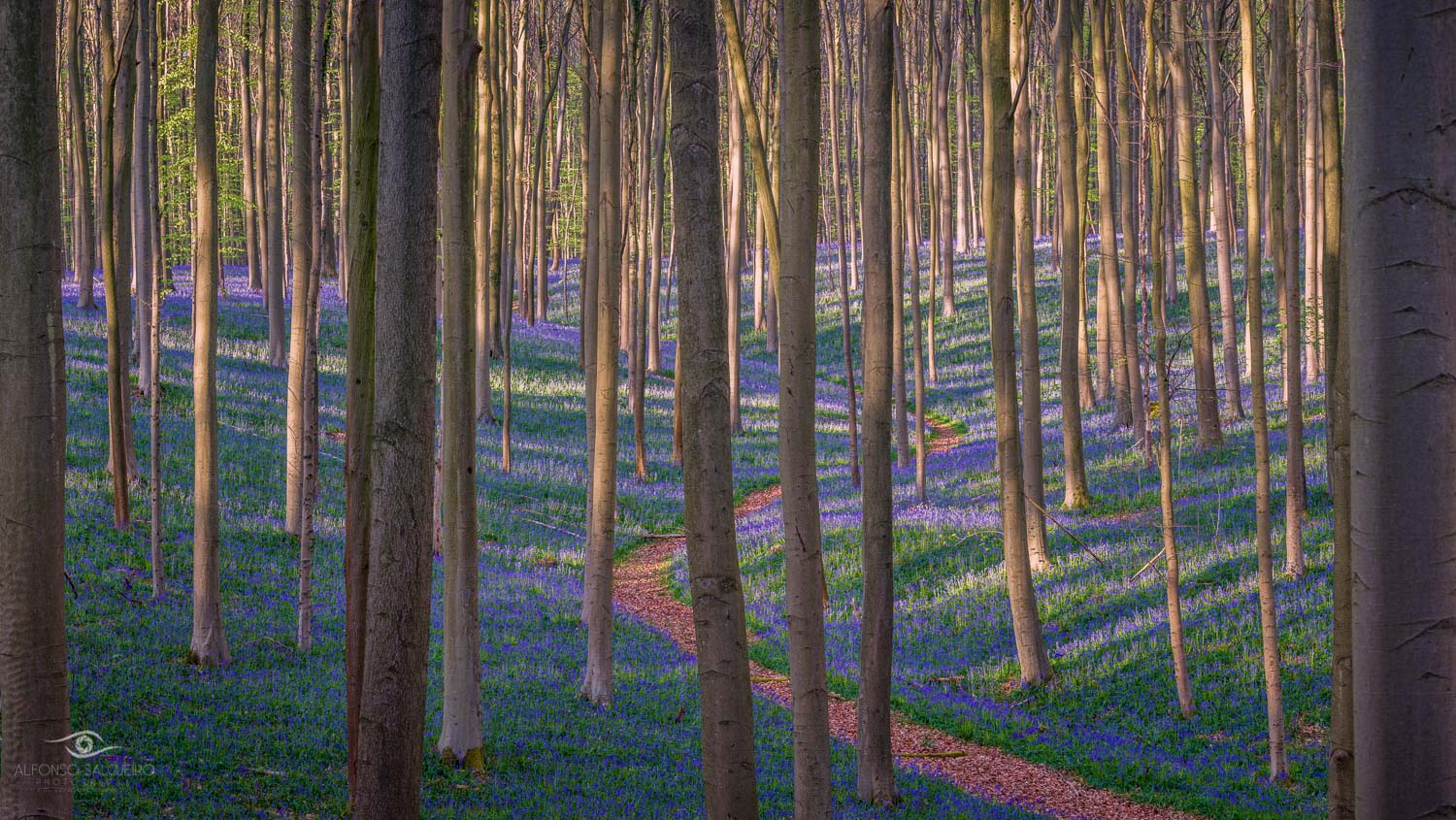 Photography Workshop - Hallerbos - Belgium