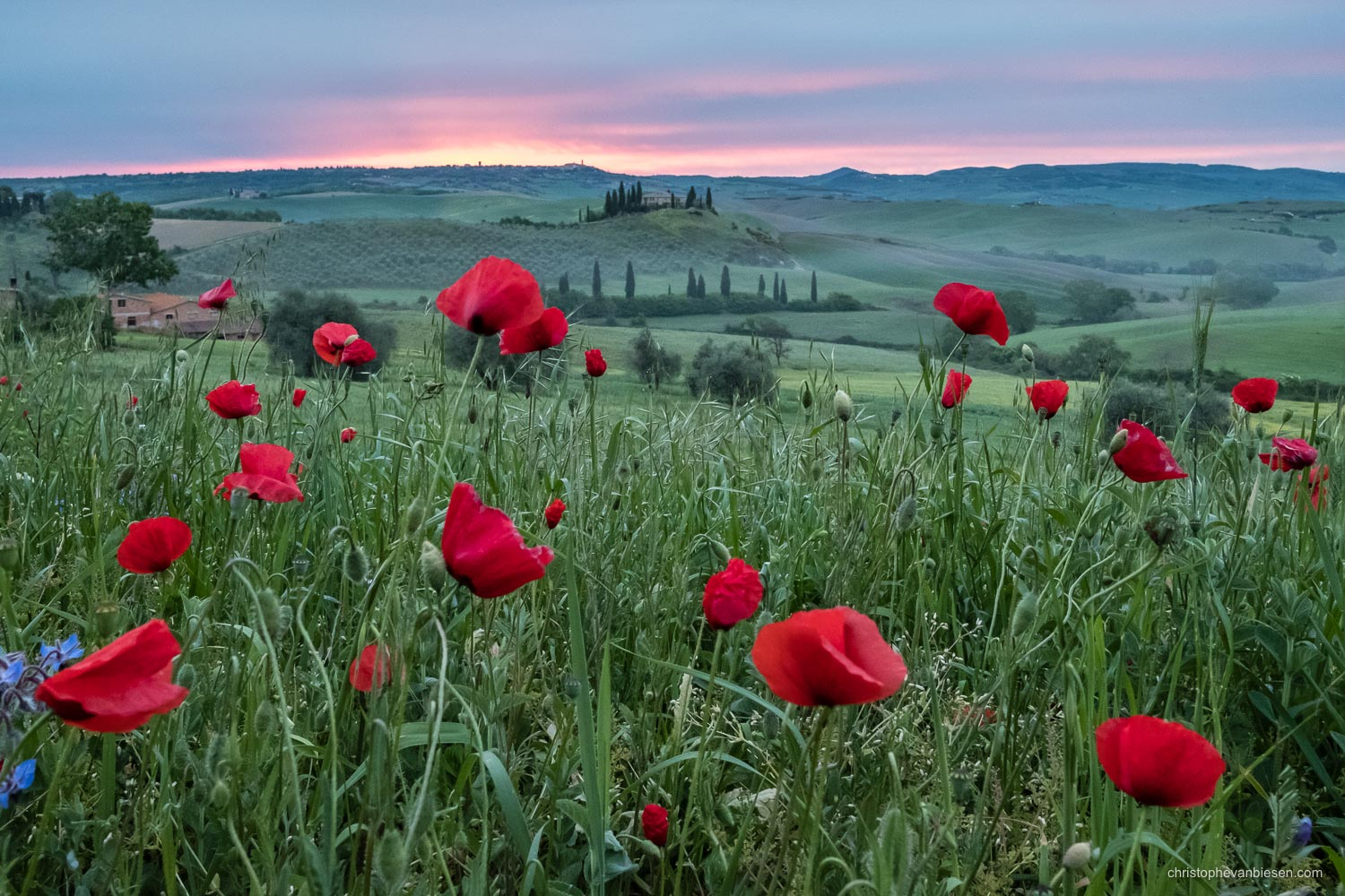 Tuscany - Italy - Sunrise in Tuscany's Val d'Orcia near San Quirico d'Orcia - Tuscan Rubies