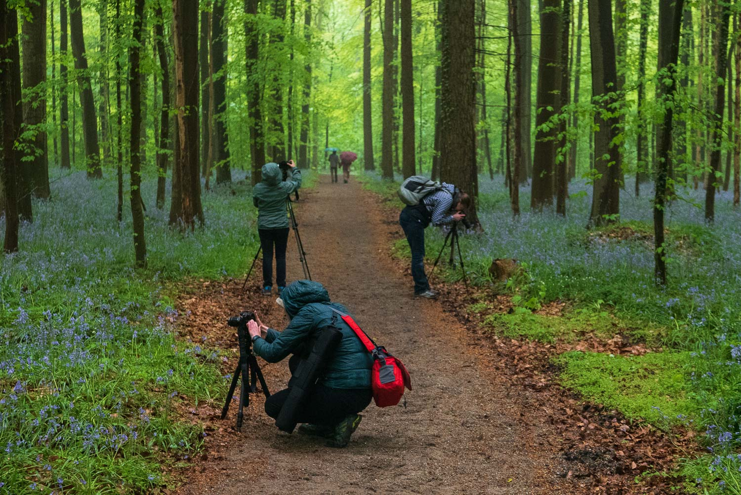 Photography workshop in Belgium's bluebell forest