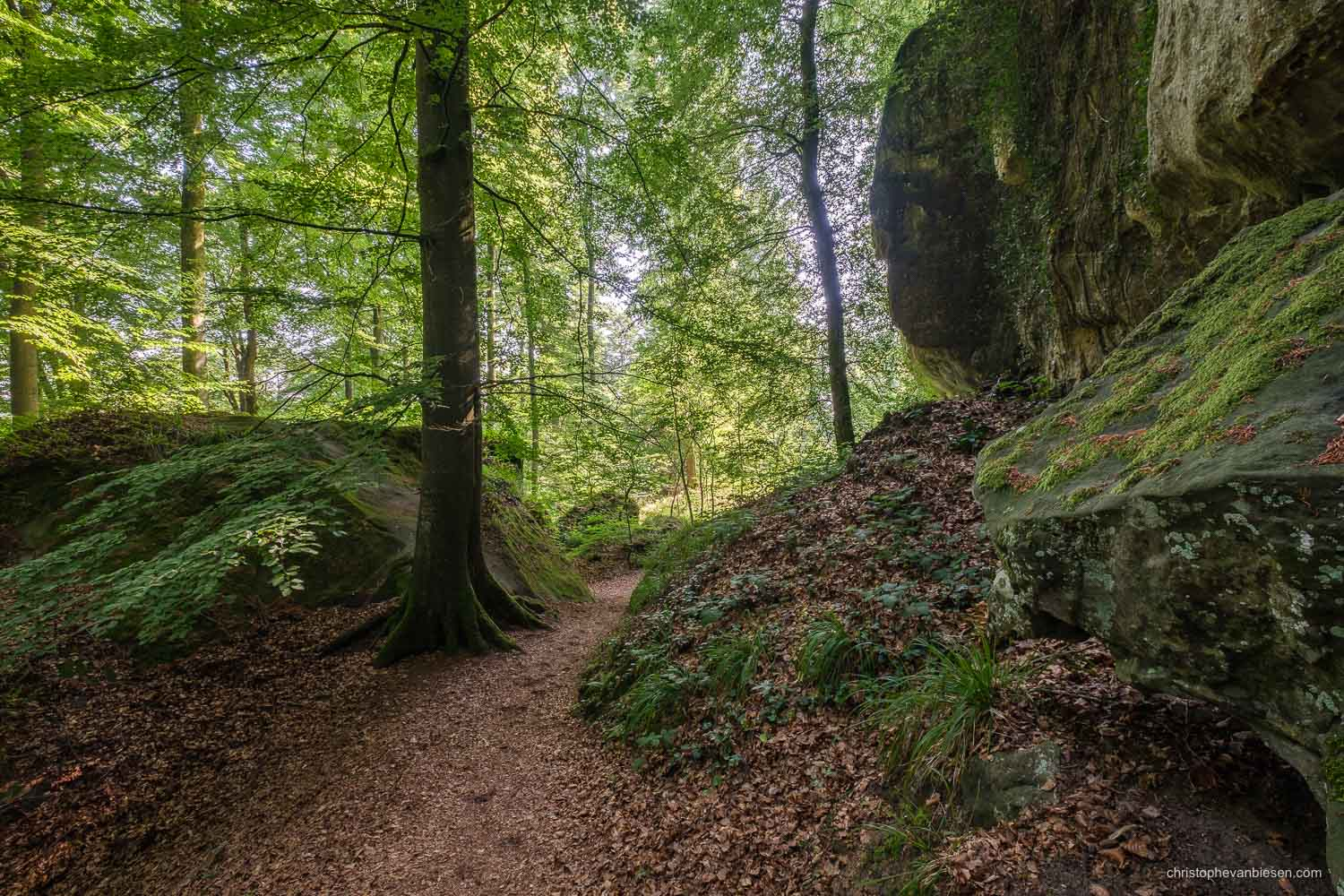 Visit the Mullerthal - Luxembourg - Hiking along the Mullerthal trail in eastern Luxembourg - Green Haven