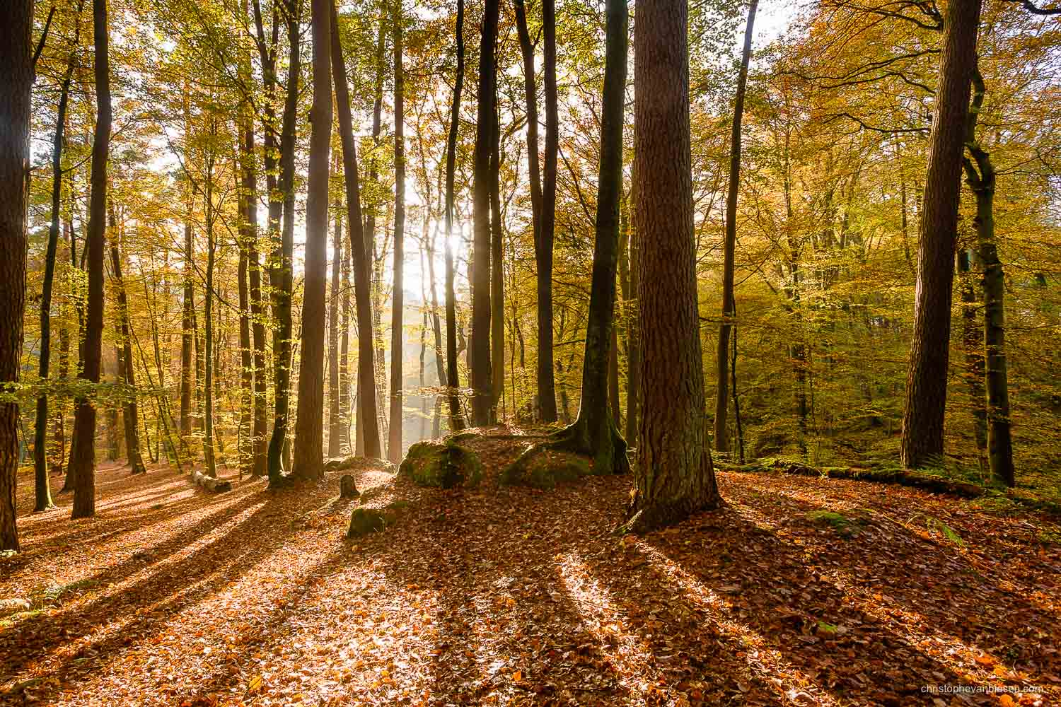 Visit the Mullerthal - Luxembourg - Autumn in Luxembourg's forests in the Mullerthal region - Creeping Shadows