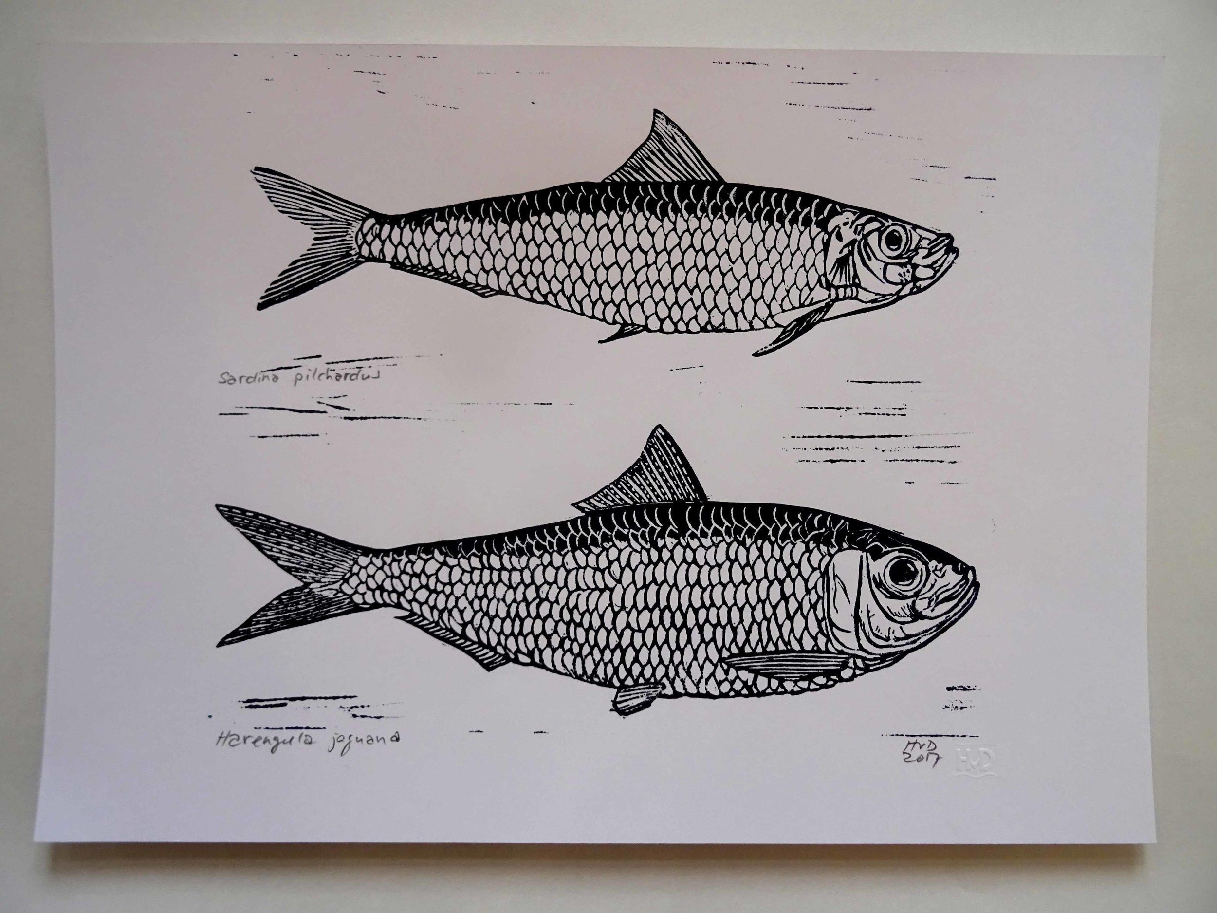 228/229 sardines, 25x30 cm, 40 €