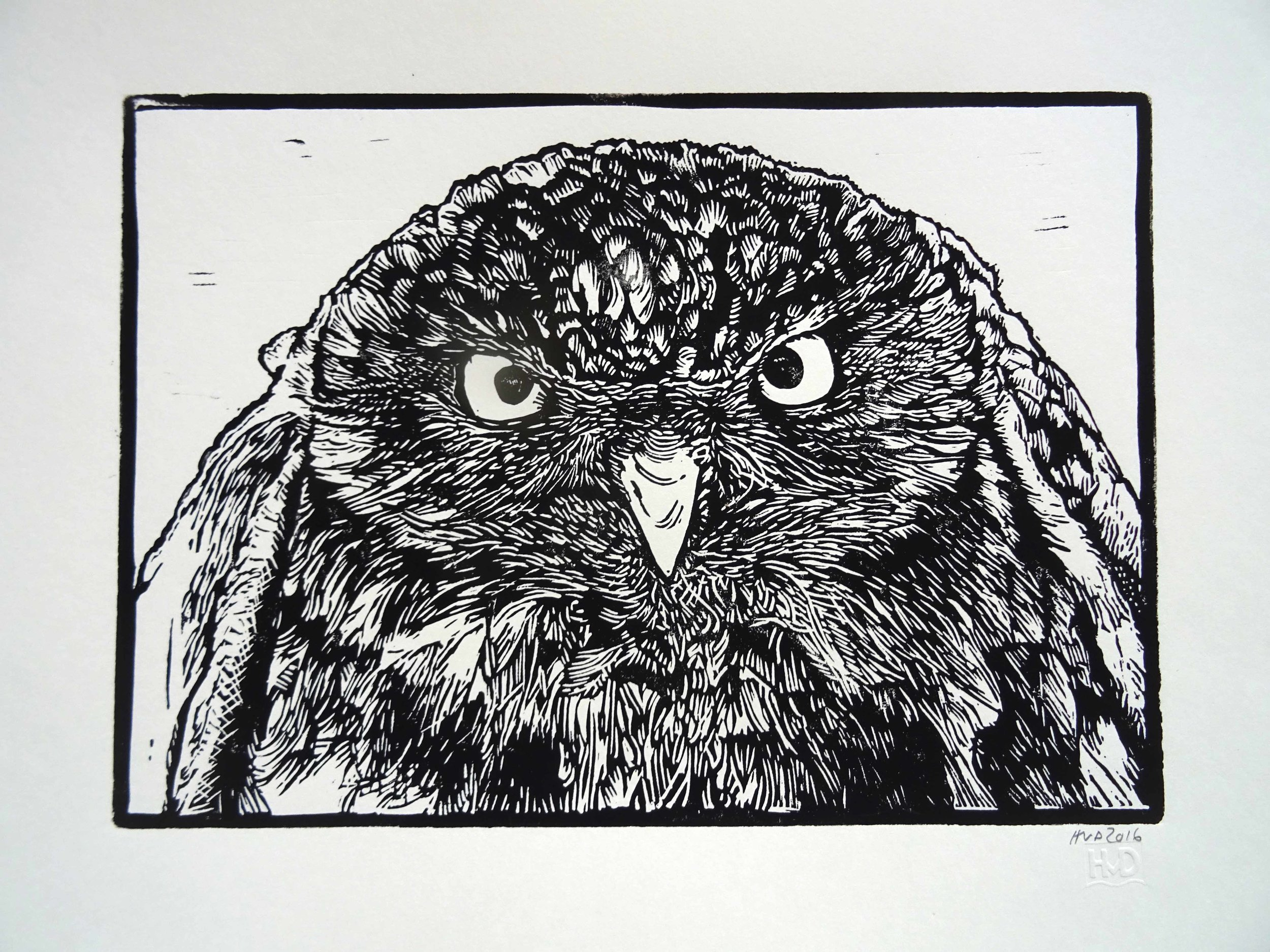 198 - Kauz, lino 21x30 cm, 50 €