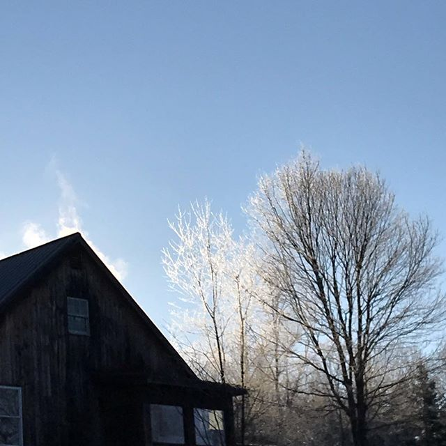 That sun finally touching the 8 degree air and ice covered trees #cchfarm