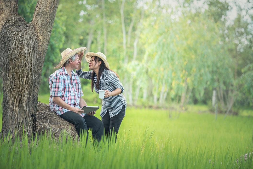couple-in-field-tree.jpg