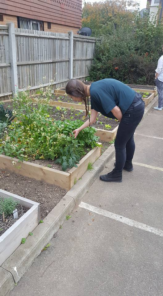 Picking crops for the Healthy Families Programme session.