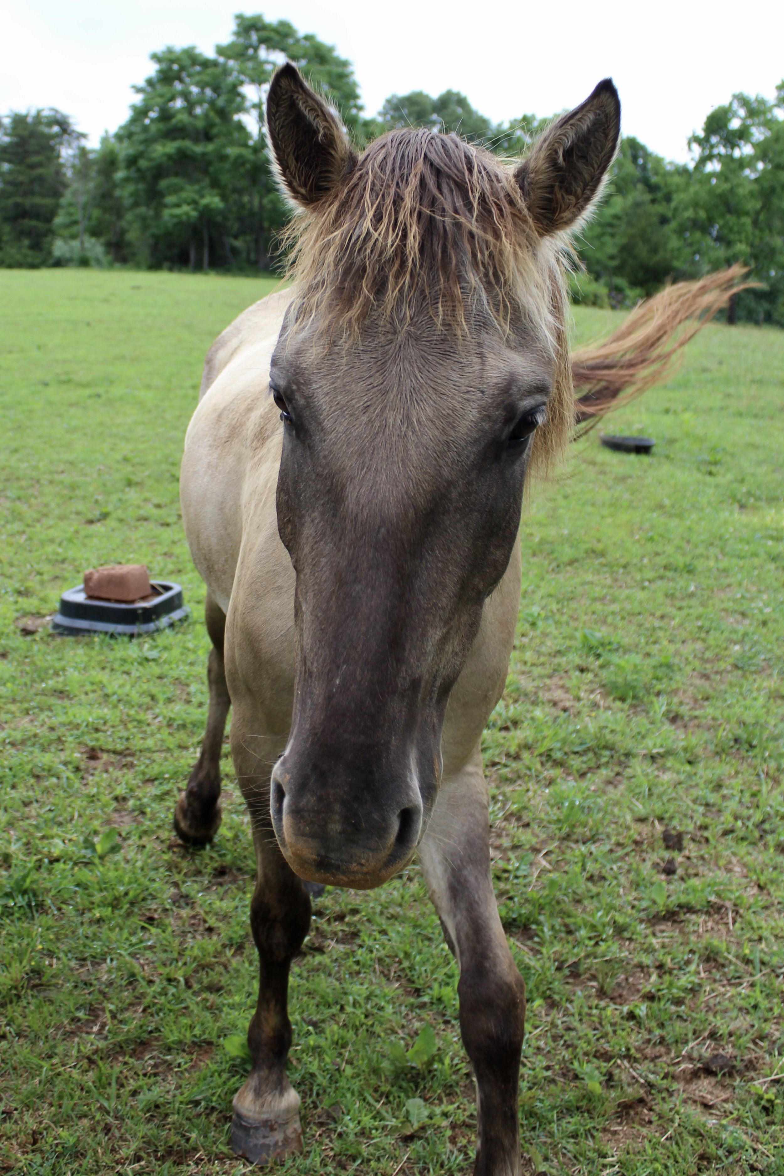 Neptune - -I love to play tricks and pull pranks-Some call me the jester of the group- Mom says I have proud flesh on my right hind fetlock, but it doesn't seem to bother me.-I love to be groomed