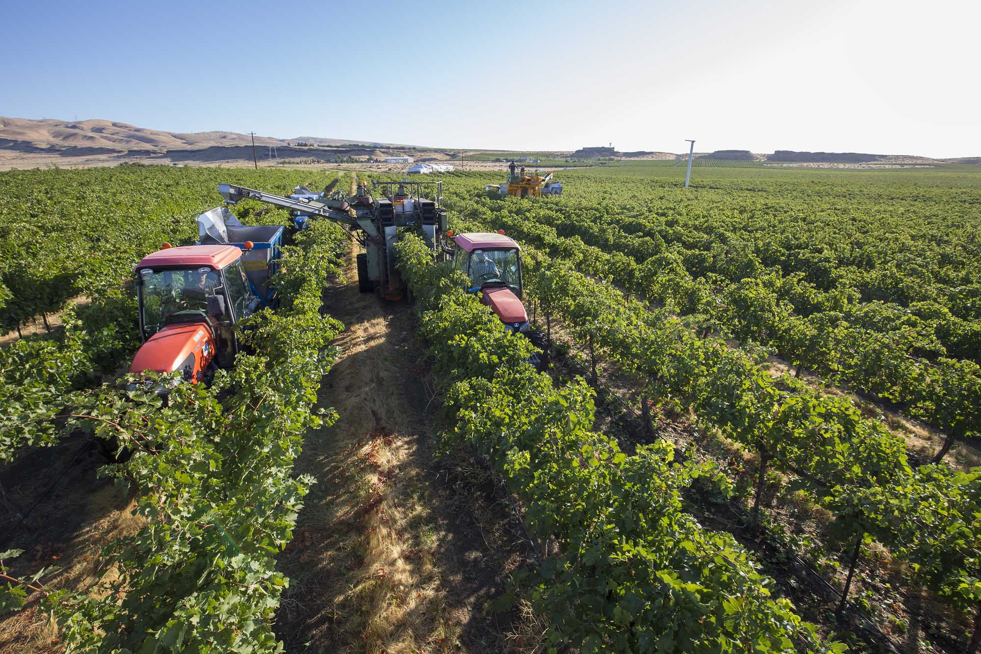 Washington turned 20,000 tons of syrah into wine last year