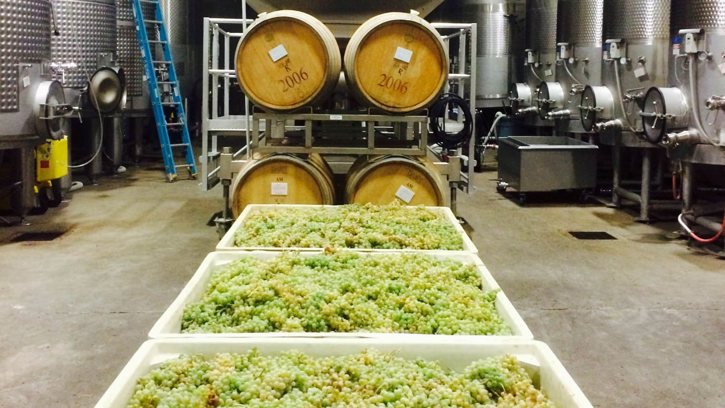 Move Over Chardonnay: Is Picardan the Next Great White Wine?