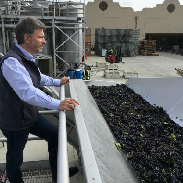 2018 Harvest Begins at Gloria Ferrer Caves & Vineyards