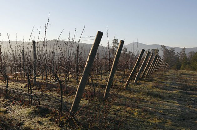 Recent Chile vintages: A review and wines to try