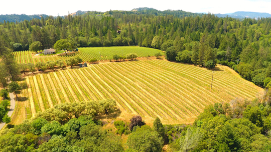 Dunn Vineyards highlighted in New (and Older) Vintages from 8 Napa Cabernet Legends