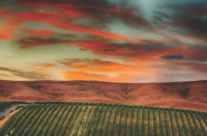 Don't Overlook Washington State's 2015 Vintage