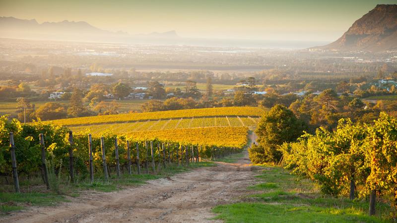 Reyneke and MAN Vintners-7 Staples of South African Wine