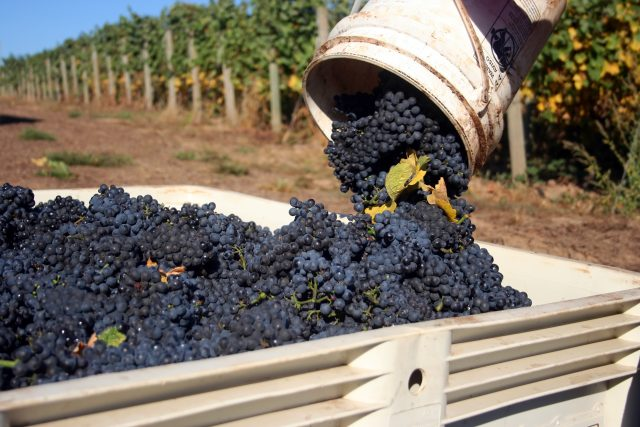 OREGON WINERIES (including A to Z Wineworks) RALLY ROUND FOR ROGUE VALLEY GROWERS LEFT HIGH AND DRY