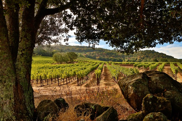 THE 52 CALIFORNIA WINERIES YOU NEED TO VISIT IN 2019