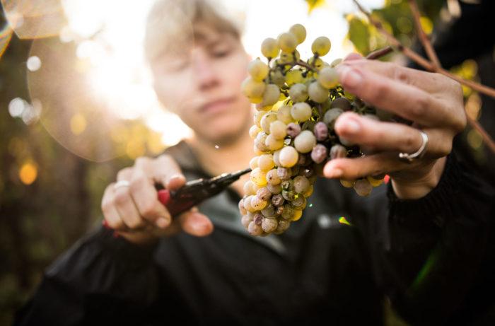The Top 10 Wine Trends of 2018
