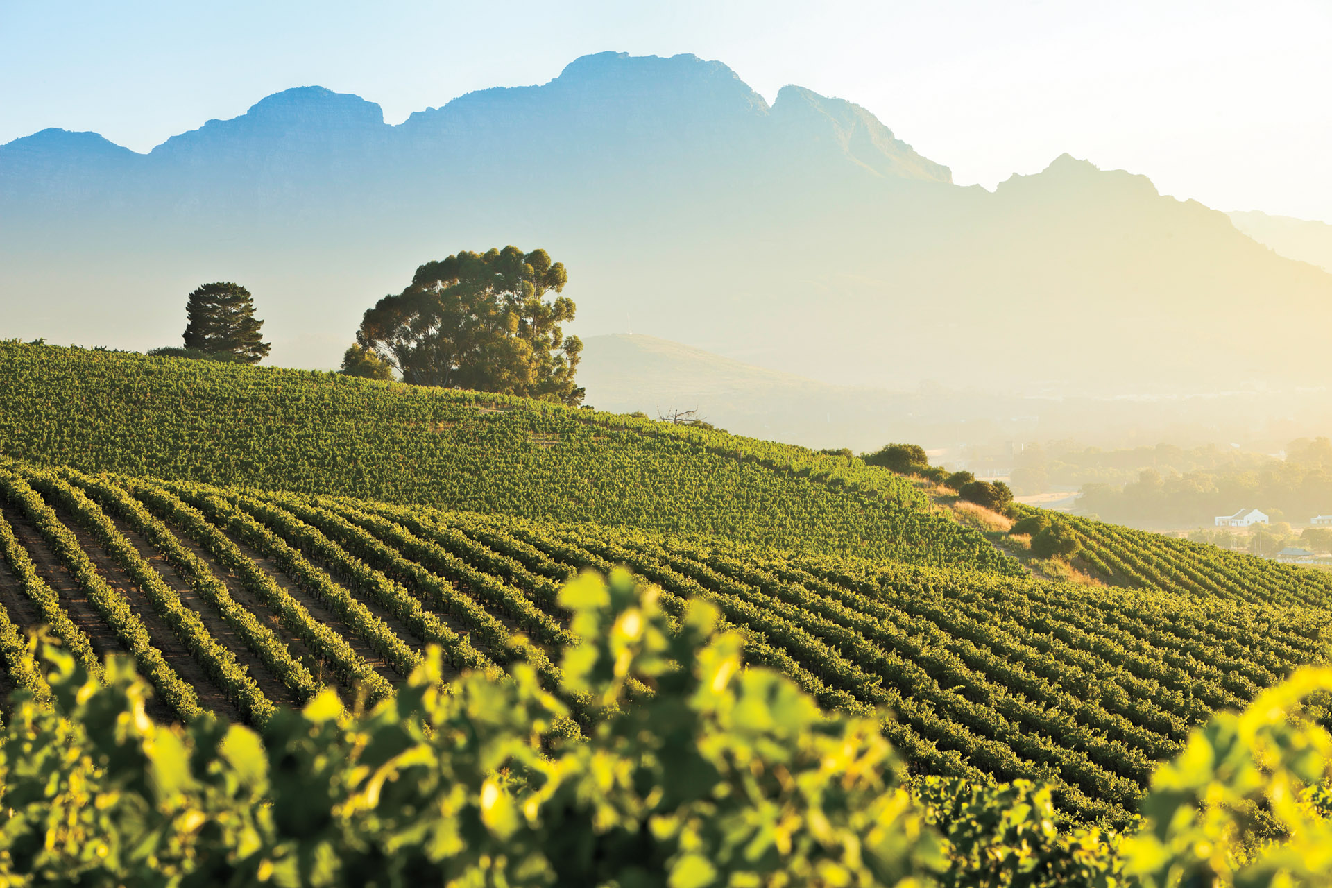Where to Find the Best South African Wine