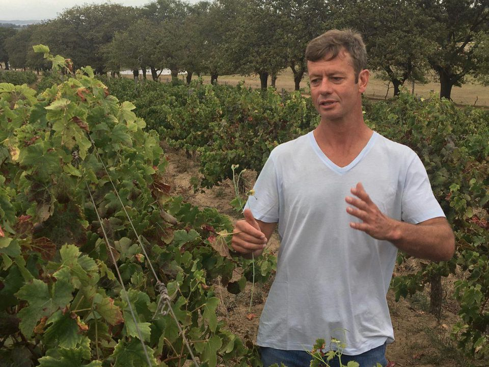 Tales From Reyeneke's South African Winemaker