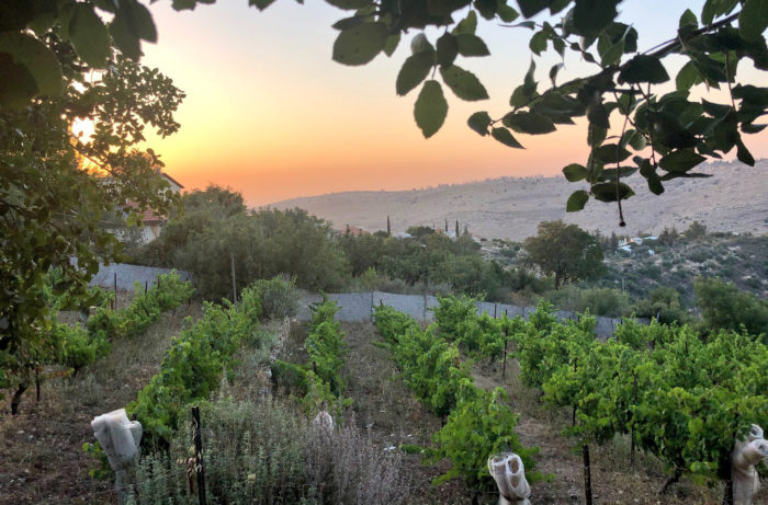 Top Israeli Wine Misconceptions Debunked