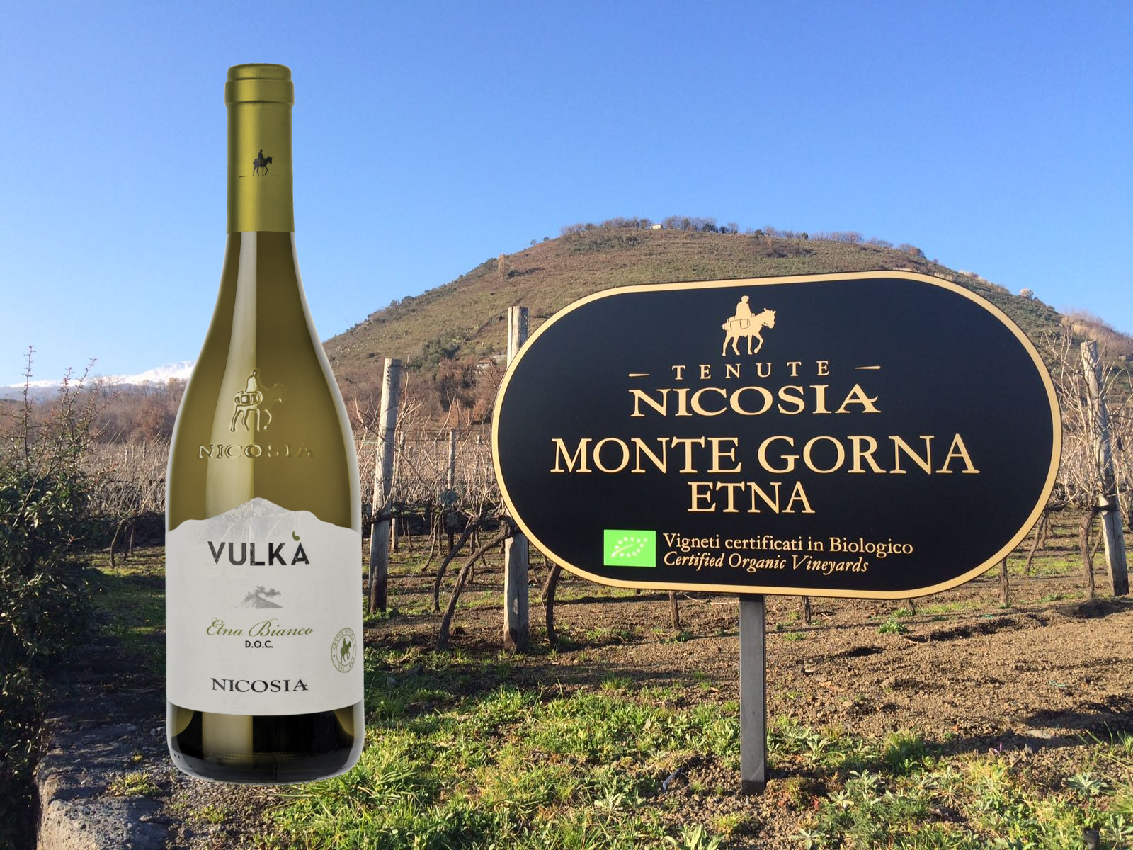 Expert's Choice: Sicily's native whites