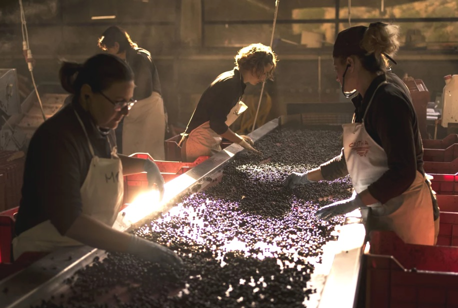 Ornellaia : How Wines From a Little-Known Region Became Some of the Most Expensive in the World