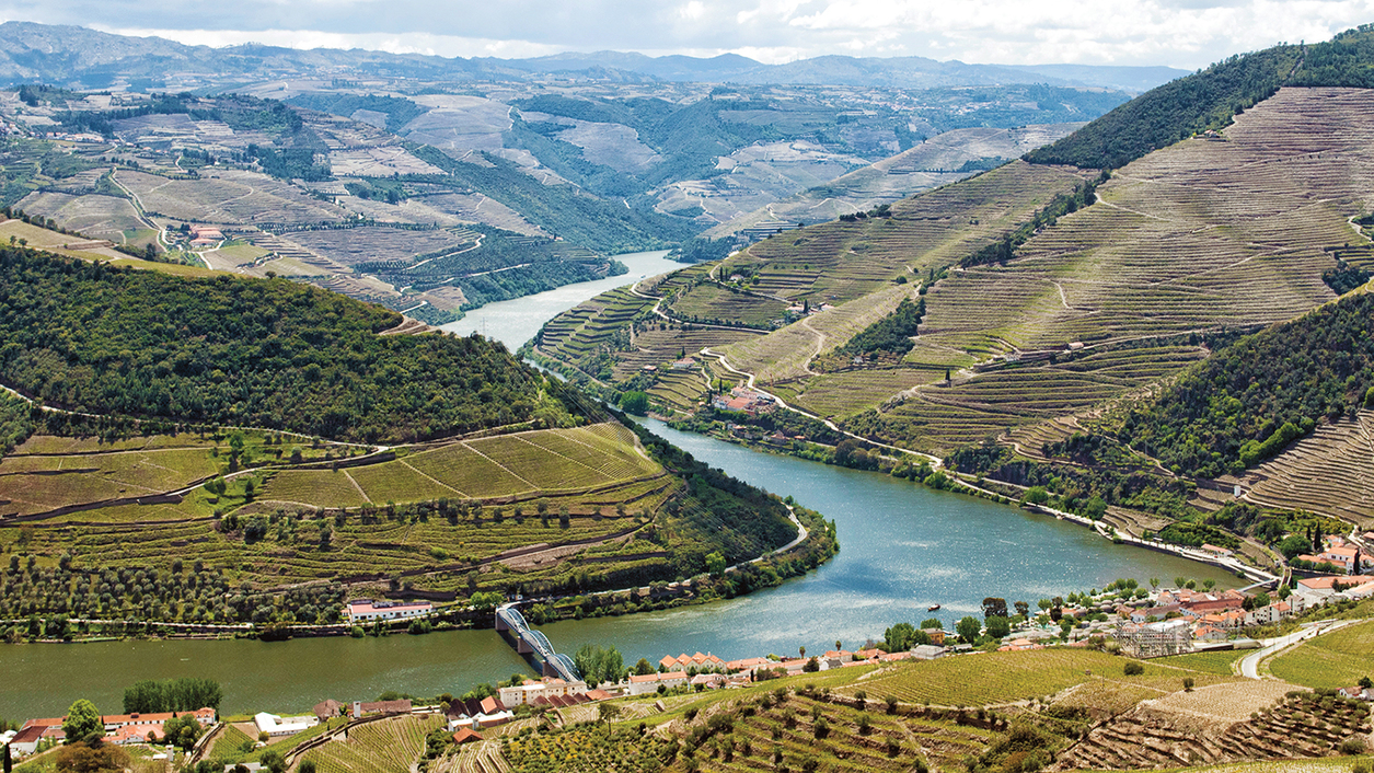 Field Blend Fever The old vines of Portugal's Douro Valley yield exceptional reds and whites