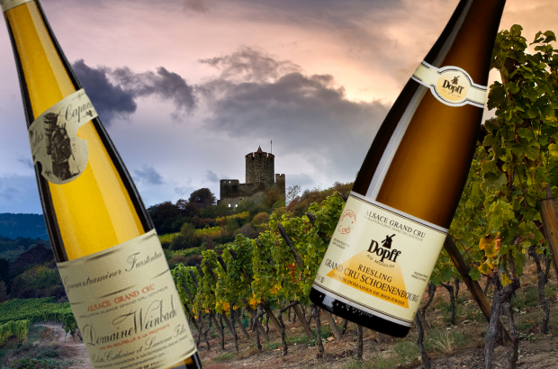 Alsace: Top Riesling terroirs
