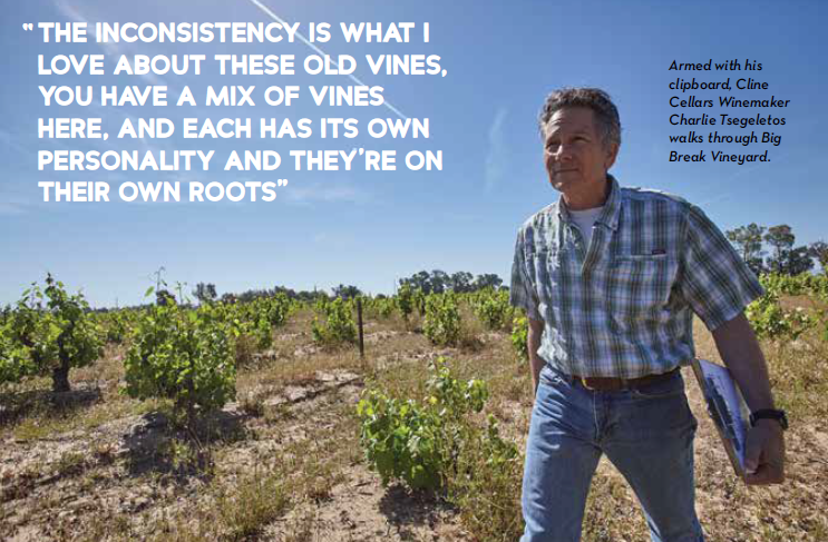 Sands of Wine: cline Family Cellars