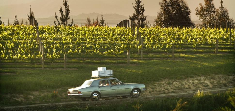 Chardonnay Storm on the Horizon