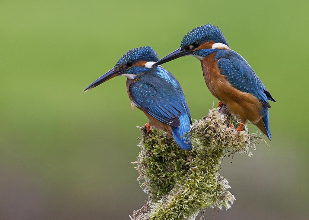 kingfisher1 3.jpg