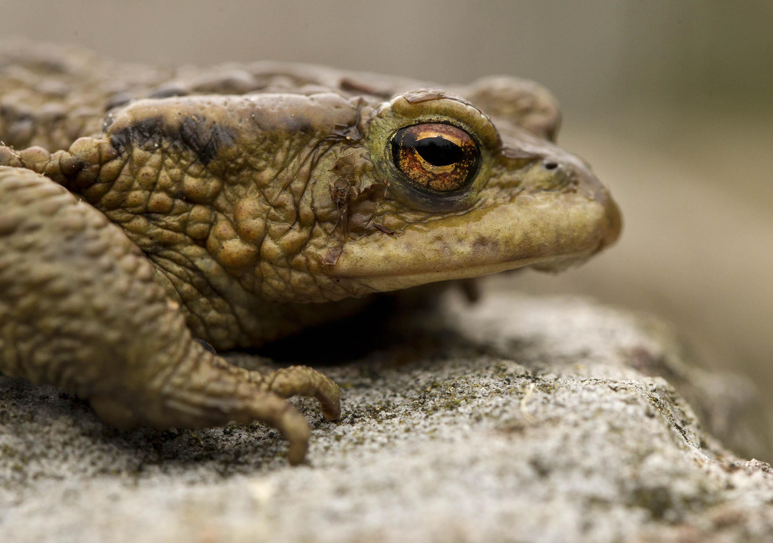 toad6.jpg