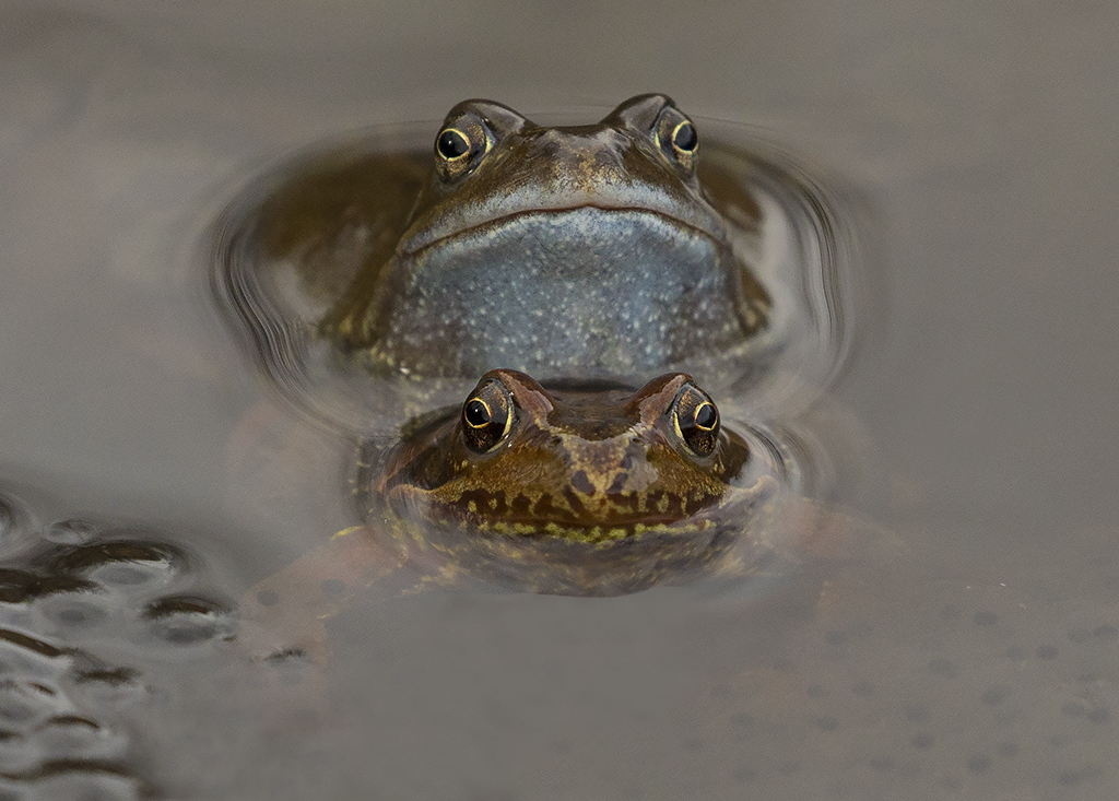 frogs6.jpg