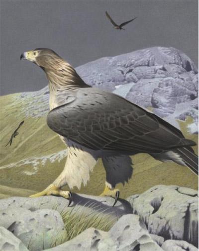 Haast Eagle.jpg