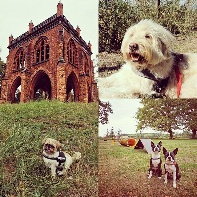 Wieder ein paar schöne Tage mit den Schnuffelsens gehabt 😎 #potsdam #dogs #dog #hund #hunde #dogtrainer #dogwalker #dogsofinstagram #dogstagram #shihtzu #bostonterrier