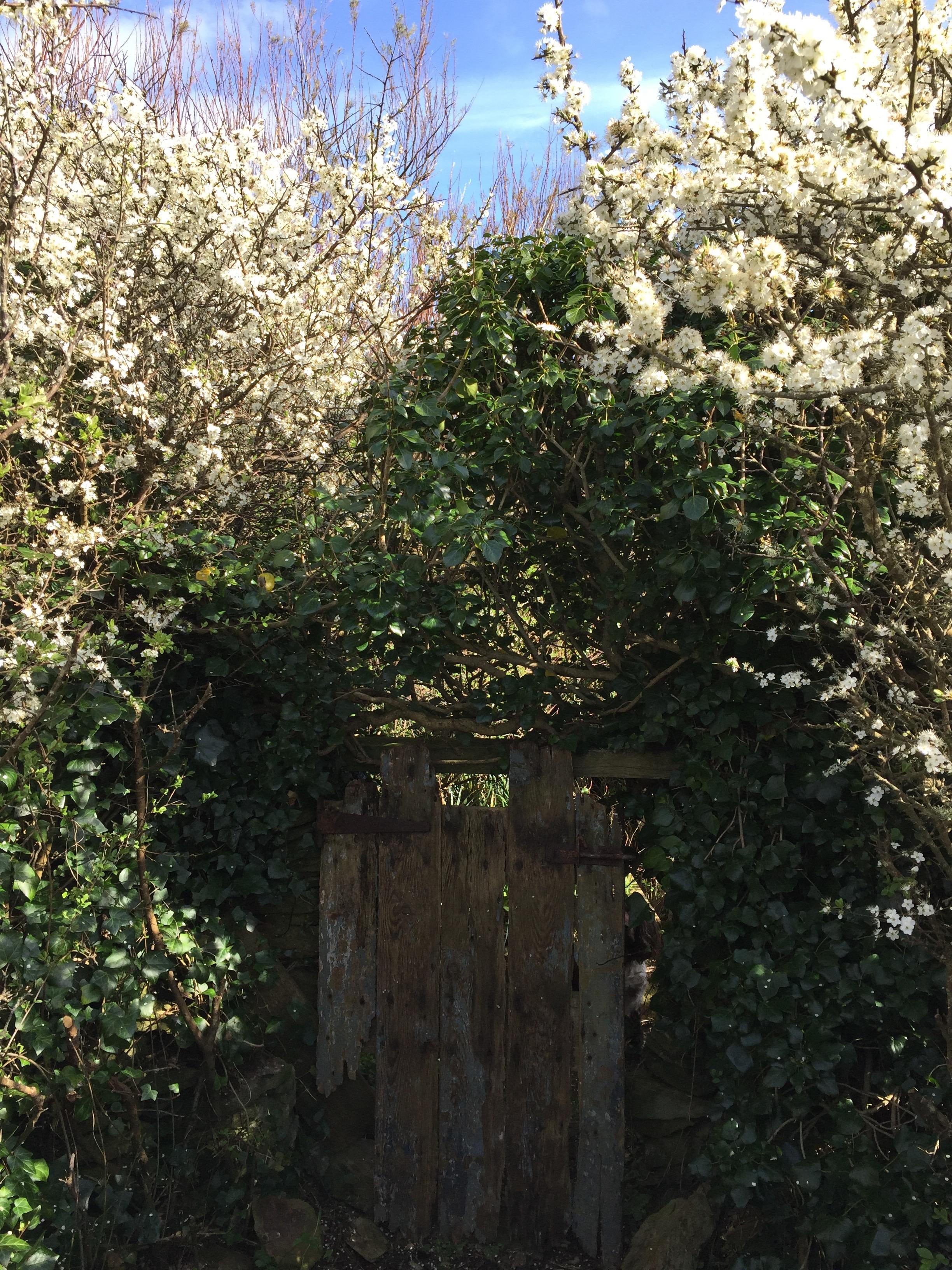 gateto'secret'clifftopgarden.jpg