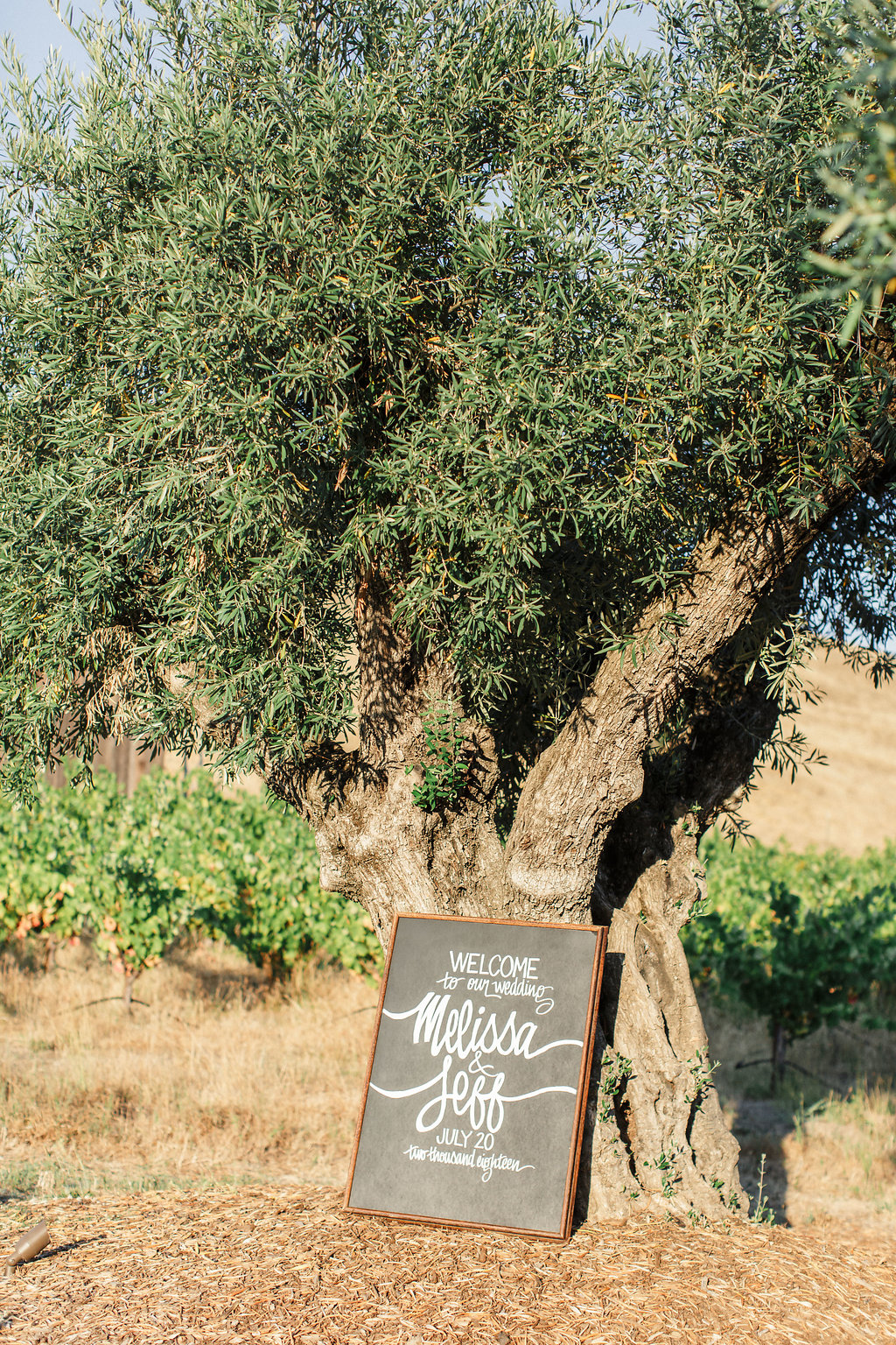 Rus-Farm-Healdsburg-Wedding-Olive-Tree.jpg