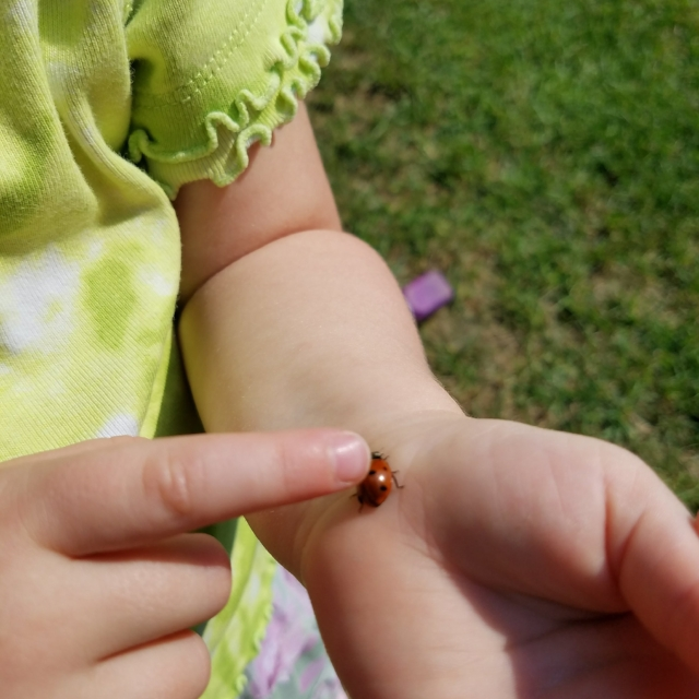 ...the very first time a ladybug landed on you?
