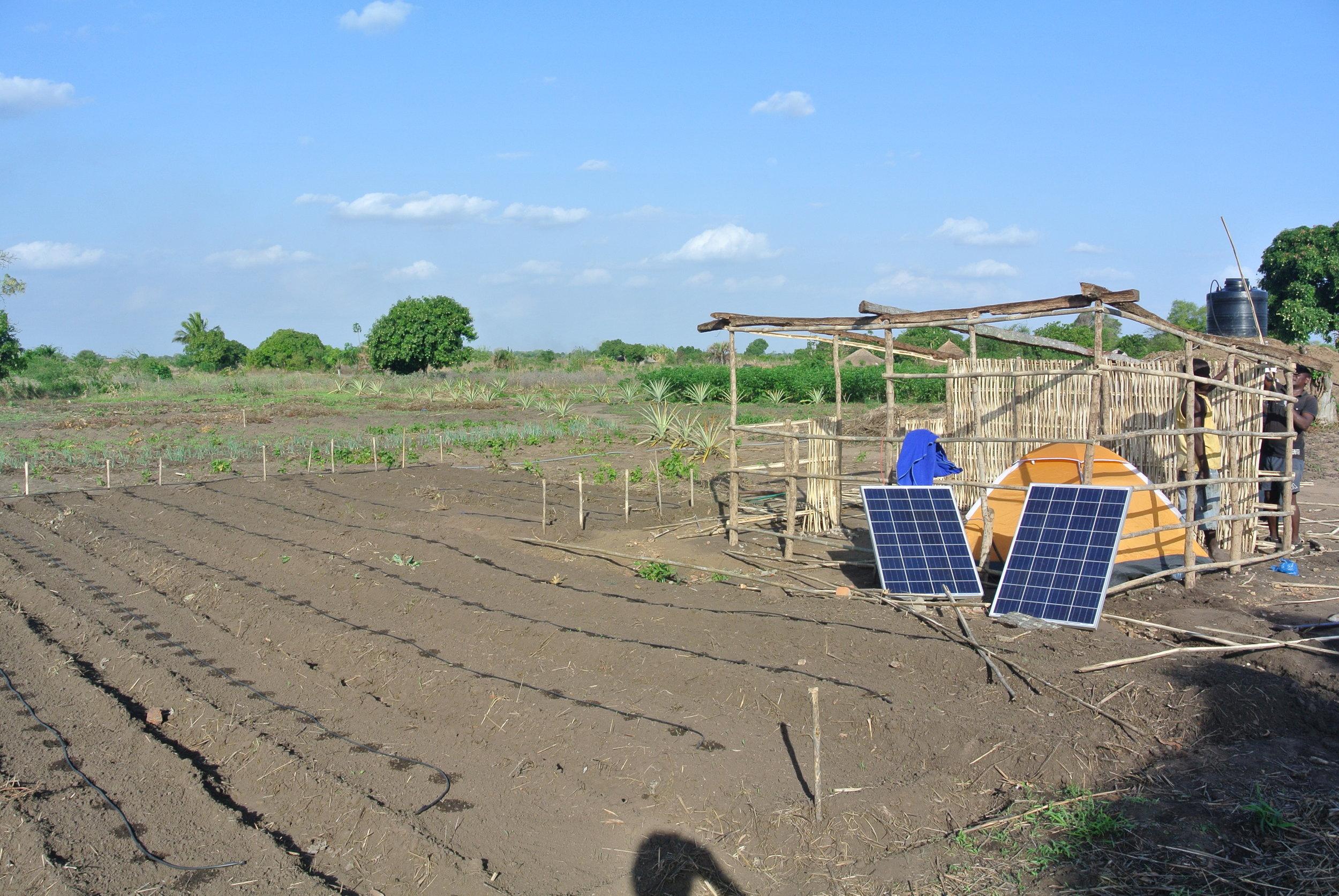 Solar Panels and Drip Irrigation.JPG