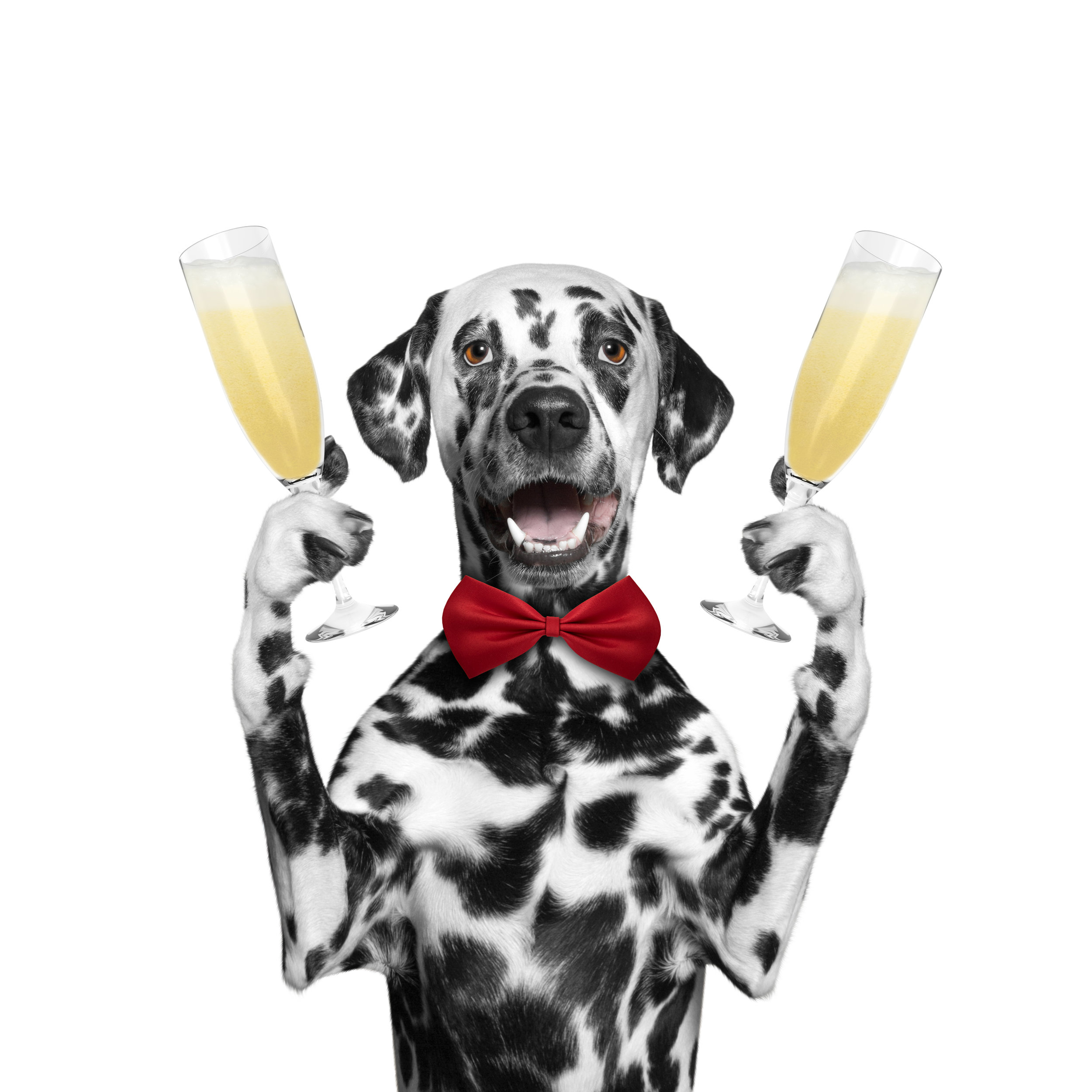 OC Dog Party Great Dane Packages