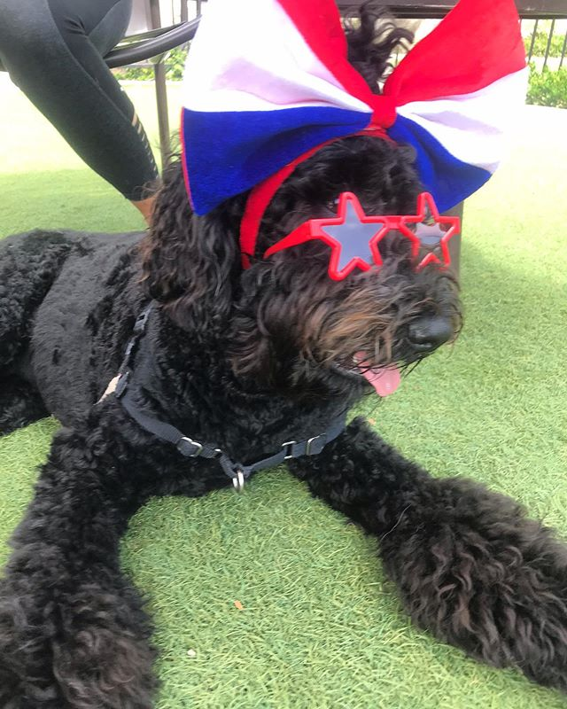 Would someone get this Star an agent!  #dogmodel #jojothediva #4thofjulydog —-FOLLOW ME @ocdogparty on Instagram... I throw AMAZING DOG BIRTHDAY PARTIES #eventplanner #ocweeklybestof2018 #dogbirthdayparty  Home of the BACON & CHAMPAGNE DOG BIRTHDAY PARTY featuring our famous Original POOCHIE CHARCUTERIE boards - #spoileddog #dogmom #dogdad #orangecountybusiness #dog #puppy #puppyparty #charcuterie #dogevent #costamesa #huntingtonbeach #santaana #newportbeach #dogwalker #dognanny #everydoghashisday #everydoghasitsday #dogparty #ocdog #theocregister #bravotv #thedailypilot #ocweekly #communitymatters