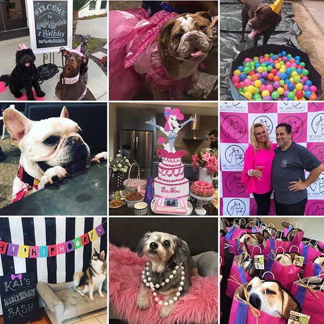 Happy one year anniversary OC DOG PARTY! and what a fun year it's been!  Big Thanks for letting me help celebrate all your pups big day!  Our fur babies deserve a party!  OC DOG PARTY ...because EVERY DOG HAS IT'S DAY!  #dreamjob #pinchme #isthisreallife —-FOLLOW ME @ocdogparty on Instagram... I throw AMAZING DOG BIRTHDAY PARTIES #eventplanner #ocweeklybestof2018 #dogbirthdayparty  Home of the BACON & CHAMPAGNE DOG BIRTHDAY PARTY featuring our famous Original POOCHIE CHARCUTERIE boards - #spoileddog #dogmom #dogdad #orangecountybusiness #dog #puppy #puppyparty #charcuterie #dogevent #ocdogparty #everydoghasitsday #throwyourdogaparty #bougiedog #spoileddog #unconditionallove #costamesa #dogbirthday #dogbirthdaycake #huntingtonbeach #ocdog #newportbeach #dogwalker #dognanny #bravoandy