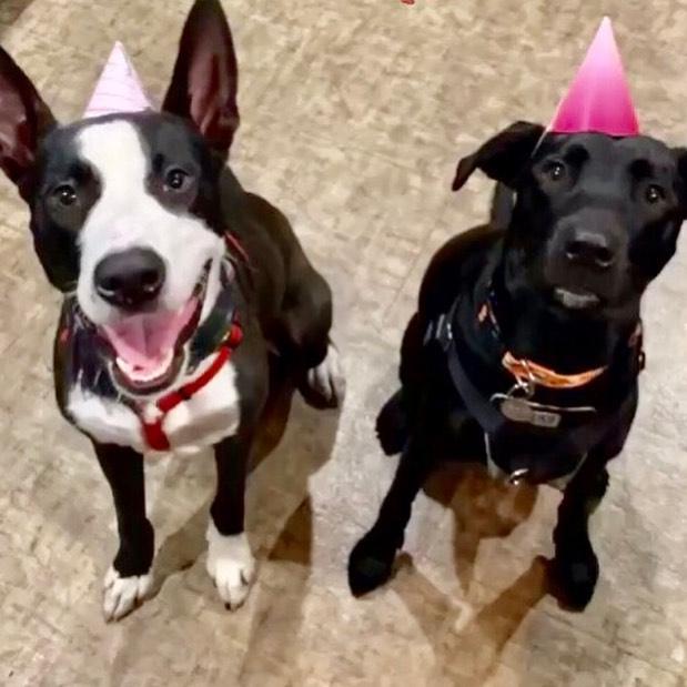 Lilly had quite the kick ass 1st BIRTHDAY PARTY!  #lillyandspadesturnone #birthdaygirl #puppuccino —-And you should FOLLOW ME @ocdogparty on Instagram... I throw AMAZING DOG BIRTHDAY PARTIES #ocdogparty #eventplanner #ocweeklybestof2018 #dogbirthdayparty  Home of the BACON & CHAMPAGNE DOG BIRTHDAY PARTY featuring our famous Original POOCHIE CHARCUTERIE boards - #spoileddog #dogmom #communitymatters #dogdad #yappyhour #dogofthemonth #dogparty #organicdogtreats #communitymatters #frenchie #orangecountybusiness #dog #puppy #puppyparty #charcuterie #dogevent #costamesadog #huntingtonbeachdog #newportbeachdog #dogwalker #dognanny