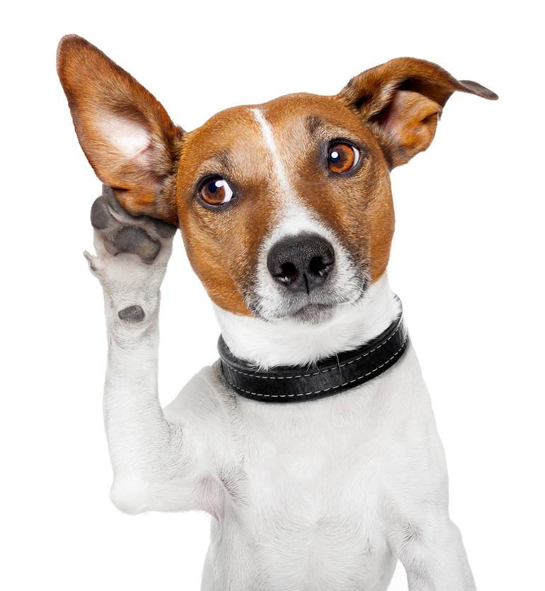 Dog-Listening-With-Ear.jpg