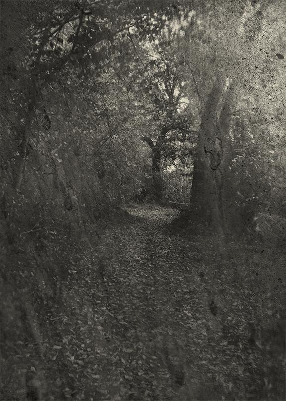 _MarweldA_woods.jpg