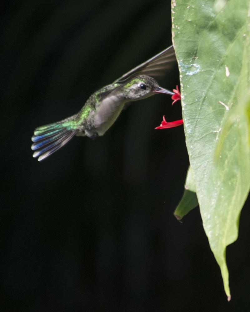 hummingbirds everywhere
