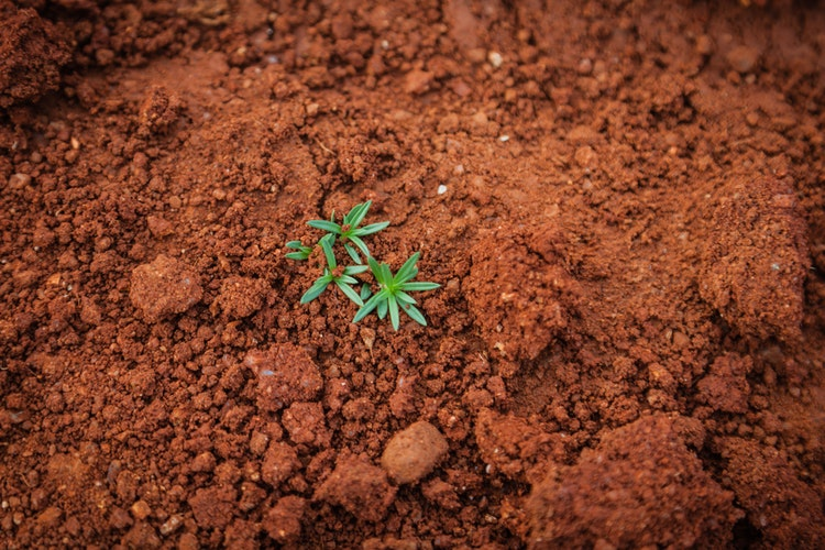 soilplant.jpeg